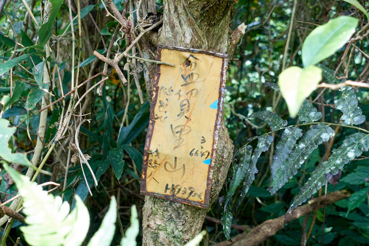 Yellow-ish sign nailed to a tree with Chinese writing