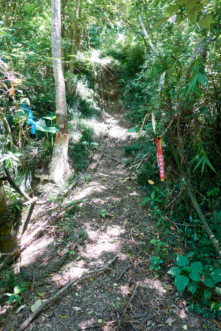 Steep trail - two large ropes in center - trees and plants on either side - several trail marker ribbons on both sides