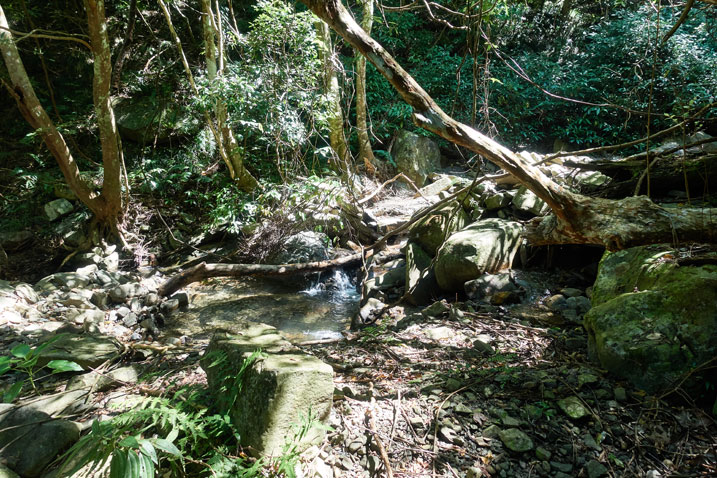 Rocky stream - fallen tree and many other trees and plants