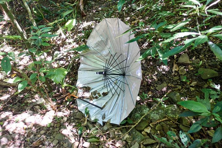 Broken umbrella in the brush