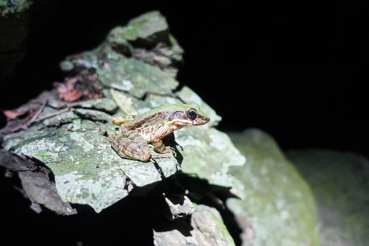 Frog sitting on rock - dark all around