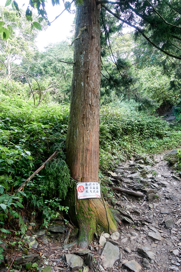 Mountain tree with sign in Chinese attached to it - trail to the right