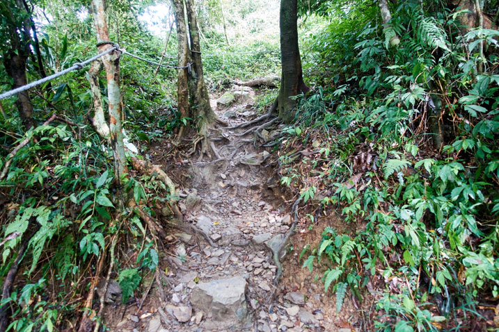 Rocky trail going up - trees on either side