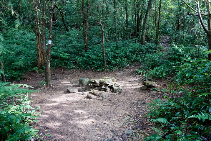 Open area in forest with rocks stacked in middle as chairs/table