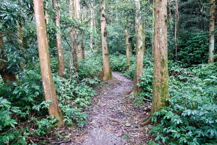 Wide trail in center with trees on either side