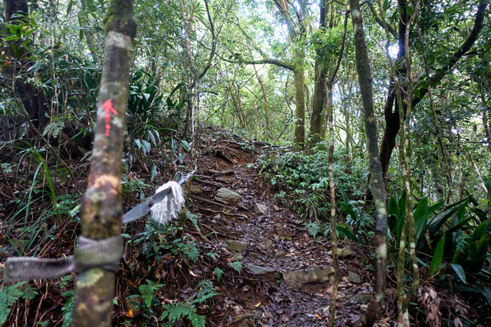 Rocky and rooty trail going up - red arrow painted on tree - rope to assist