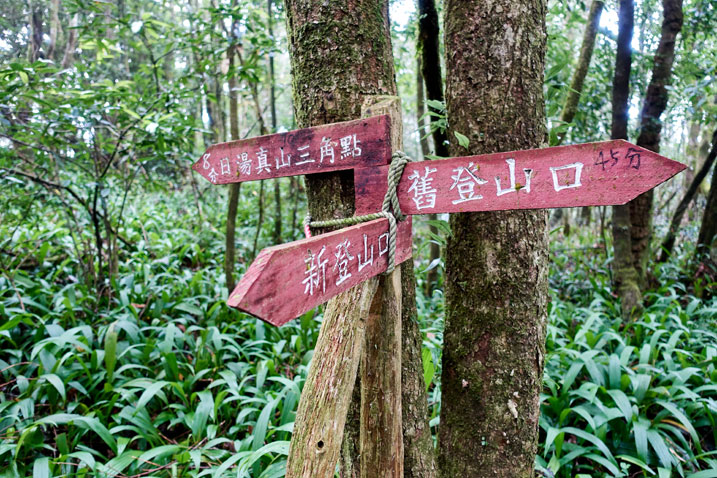 Three red signs nailed to two trees in forest