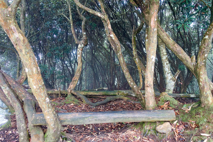 Trees and makeshift bench from a log