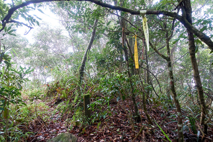 Taiwan jungle - a couple hiking ribbons attached to tree