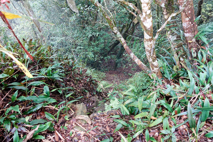 Looking down at steep drop in jungle