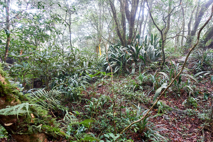 Mid-mountain Taiwan jungle with trail