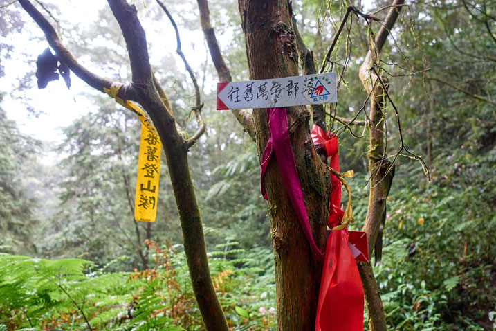 Trail ribbons and a sign attached to a couple trees