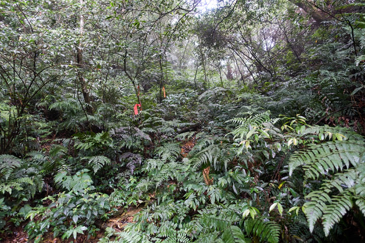 Taiwan jungle looking up a hidden dry stream bed