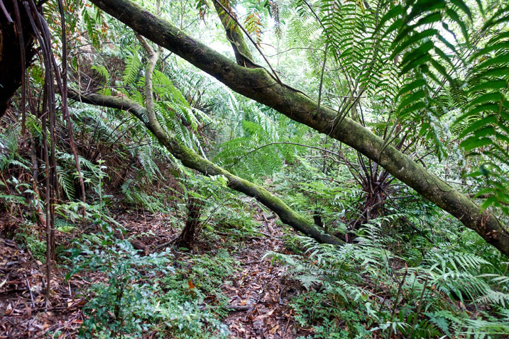 Fallen trees over jungle trail