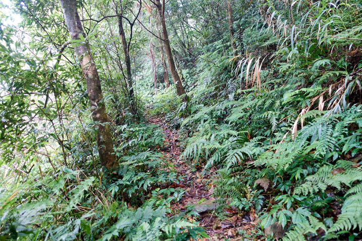Narrow trail in jungle