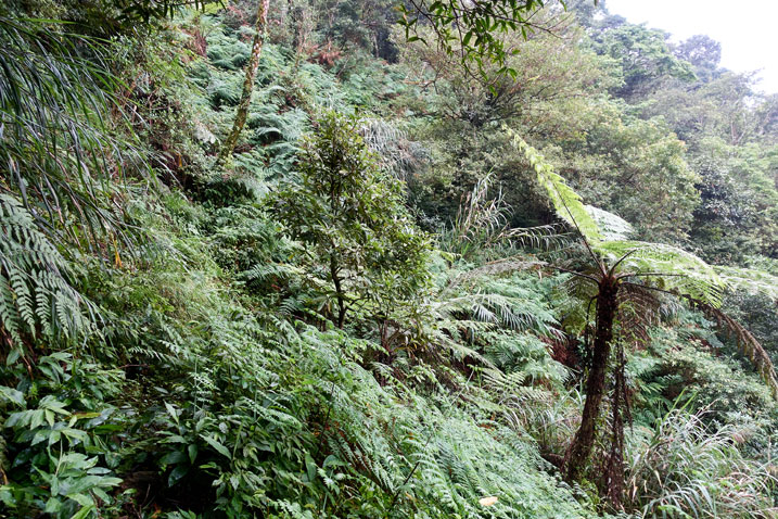 Side of mountain - jungle