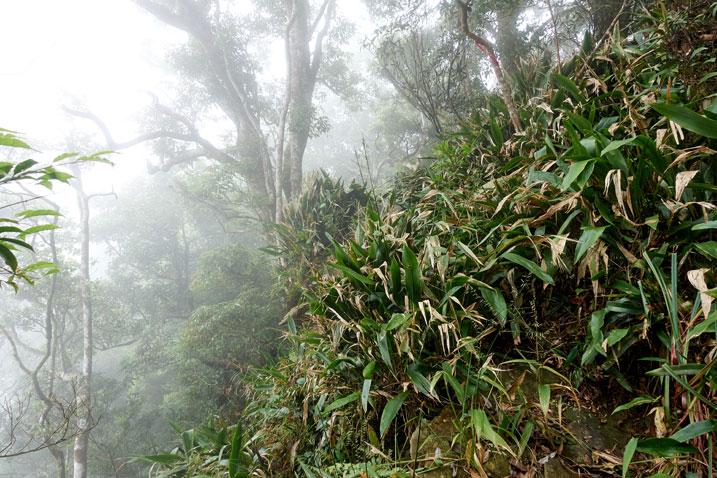 Taiwan jungle - side of mountain