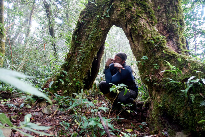 Man standing inside tree - making stupid face