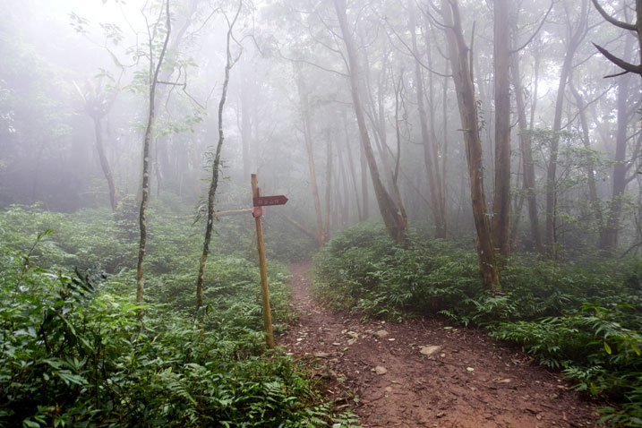 Foggy forest - sign pole in center next to trail