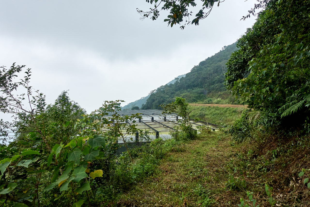 Mountains and trail - flower nursery in distance