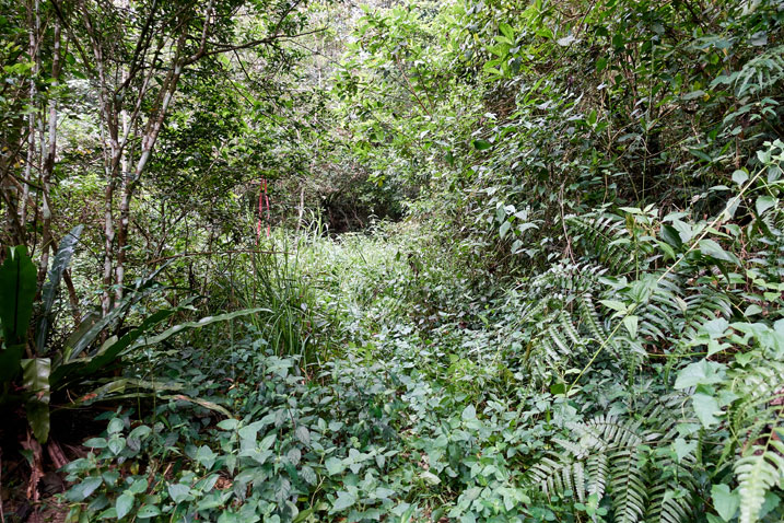 Old mountain road completely overgrown