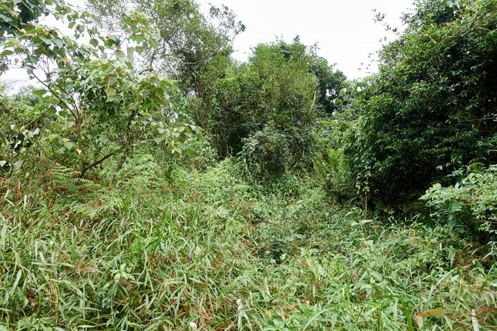 Overgrown jungle-like ridge