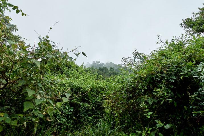 Overgrown jungle ridge