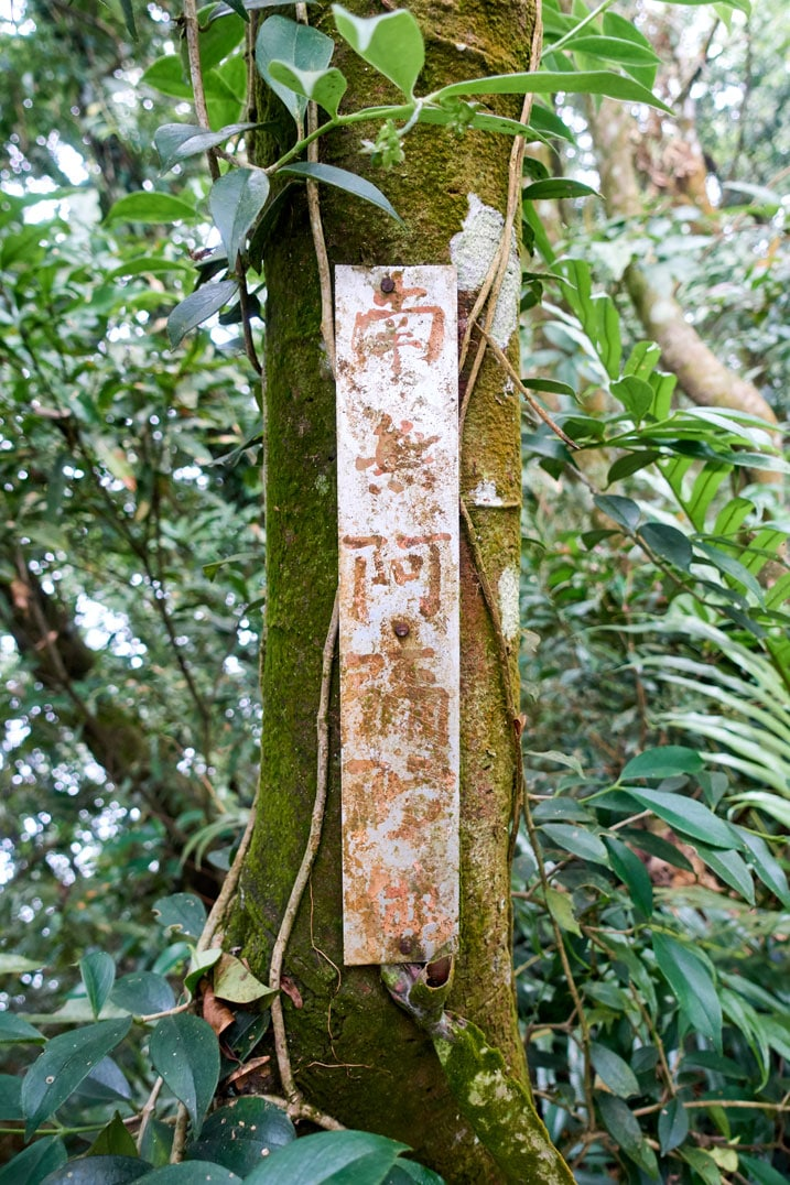Tree with long white sign attached