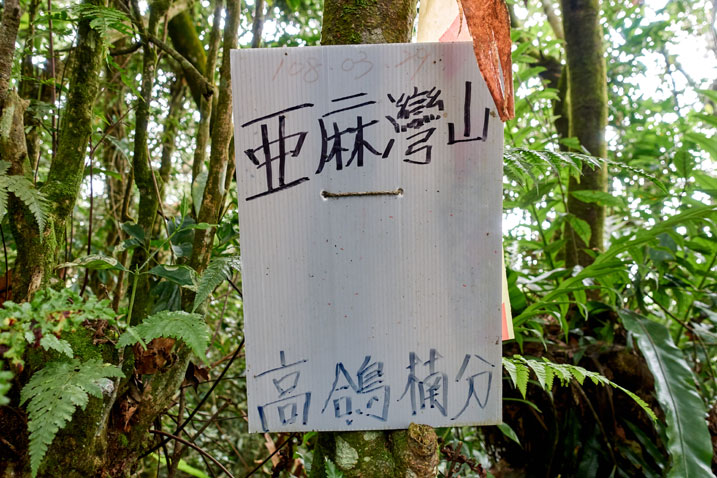 Tree with large white sign attached