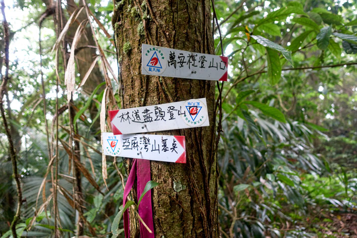 Tree with three signs attached pointing the directions