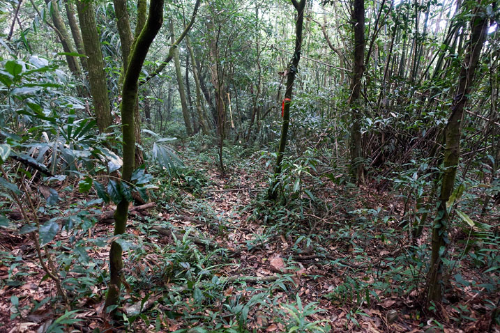 Mountain jungle forest
