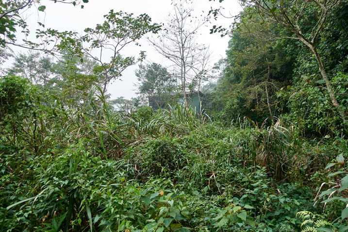 Jungle with abandoned green mountain house in the distance