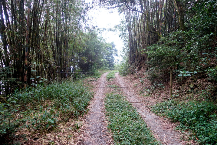 Double track dirt road in forest - two chains blocking the way
