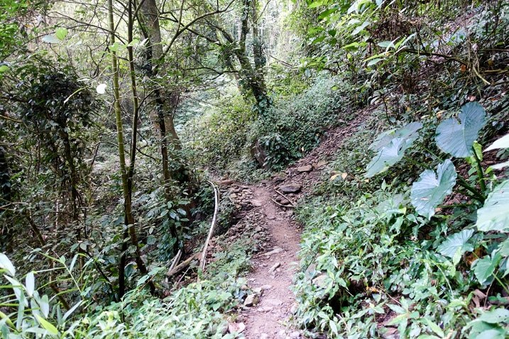 Mountain single track trail in Taiwan