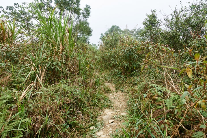 Trail in the middle of tall grass and small trees