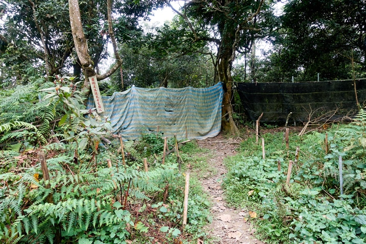 Trail leading to covered fence - many bamboo sticks stickout out of ground