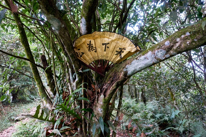 Fan with Chinese writing stuck in tree