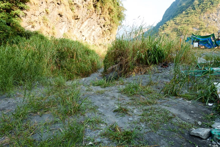 Rocky and tall grass trail - ZuMuShan 足母山