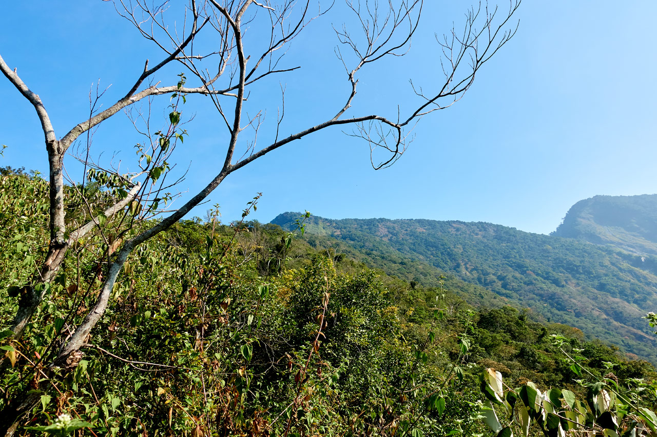 Mountain in the distance - blue sky - trees in front - ZuMuShan 足母山