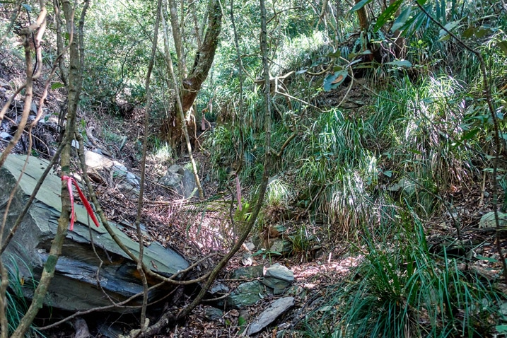 Mountain trail - trees on either side - ZuMuShan 足母山