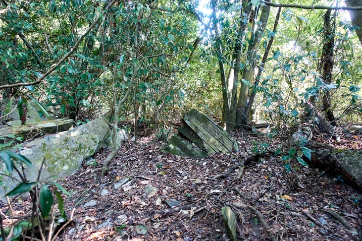 Mountain ridge trail - many trees and leaves on ground - ZuMuShan 足母山