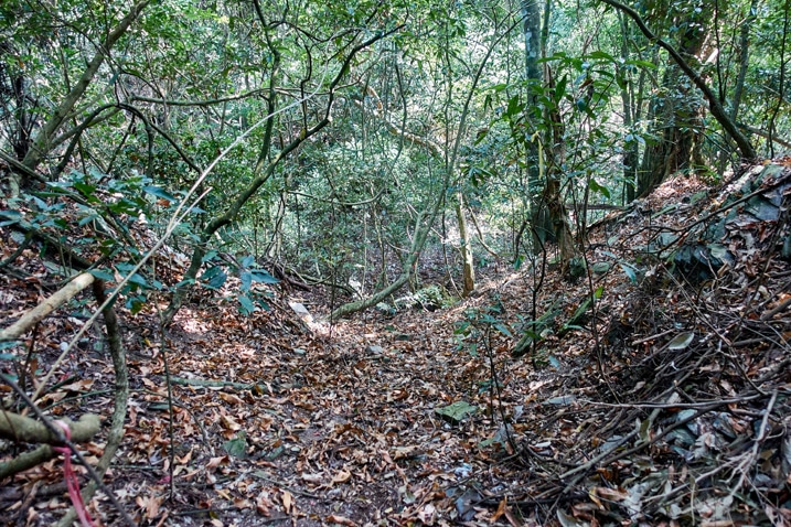 Trail with lots of dead leaves - open area - trees all around - ZuMuShan 足母山