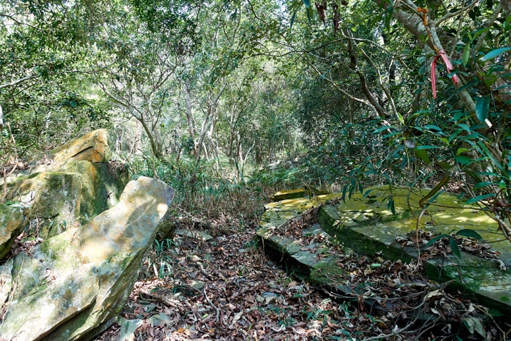 Trail passing though large low rocks - trees all around - ZuMuShan 足母山