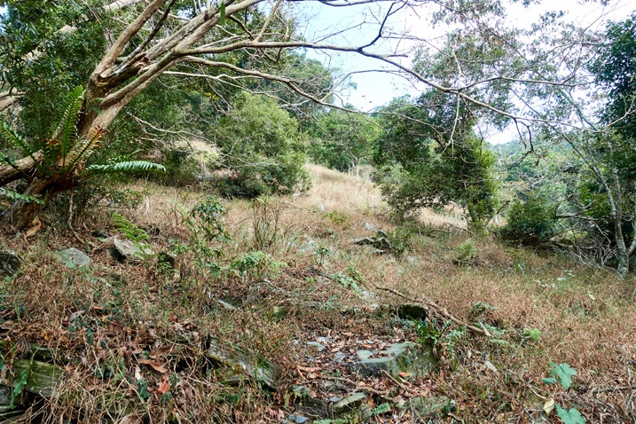 Open area with brown grass and rocks - trees around - ZuMuShan 足母山