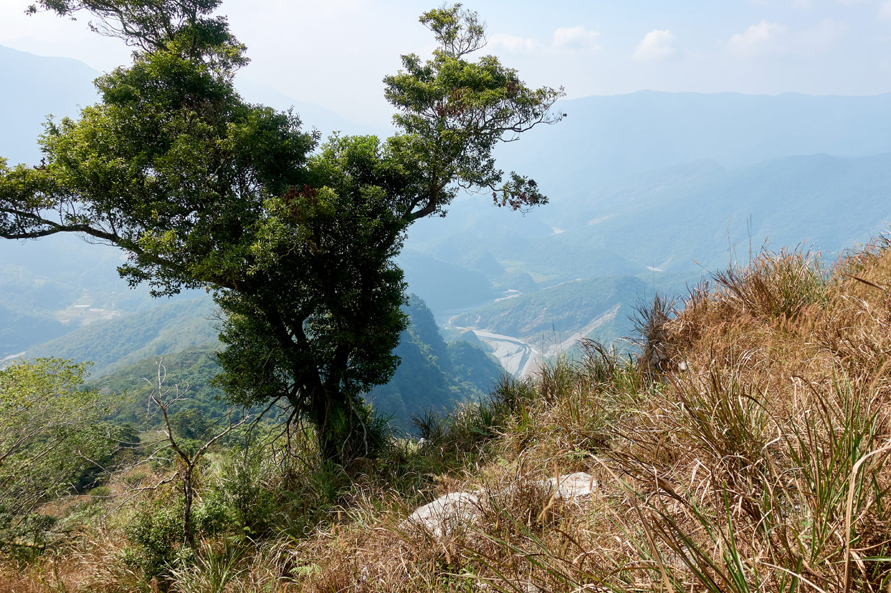 Mountain and river view from above and tree and dried grass in foreground - ZuMuShan 足母山 trail