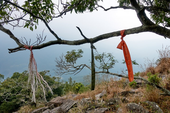 Three ribbons attached to a tree branch