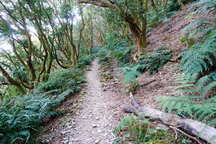 Trail - trees on either side - WeiLiaoShan Hike – 尾寮山