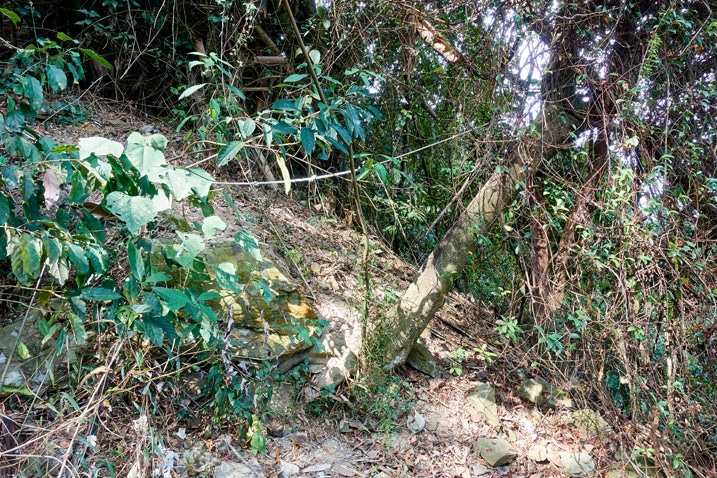 Trees and rope going up the mountain - WeiLiaoShan Hike – 尾寮山
