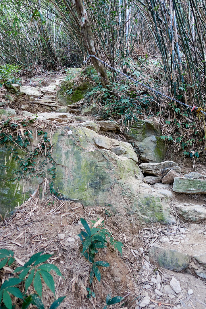 Rocky trail up a mountain - bamboo trees on either side - WeiLiaoShan Hike – 尾寮山