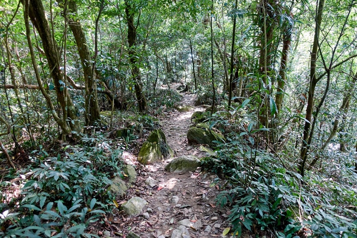 Rocky trail going up with trees on either side - WeiLiaoShan Hike – 尾寮山